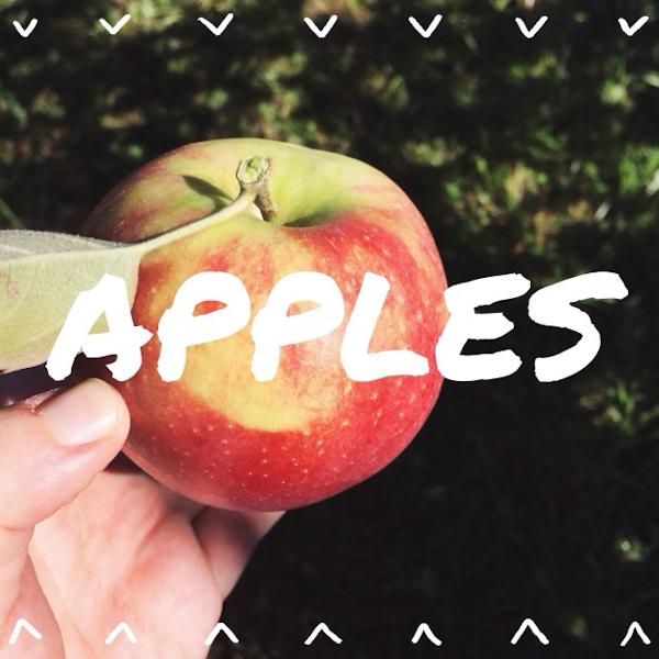 rukristin_applepicking-1