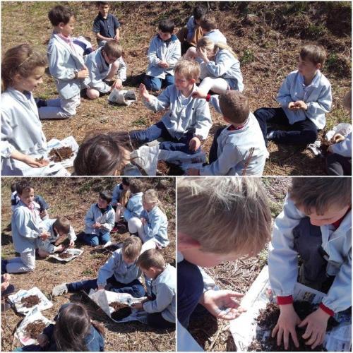 Etude du sol par les CE1 / CE2 !