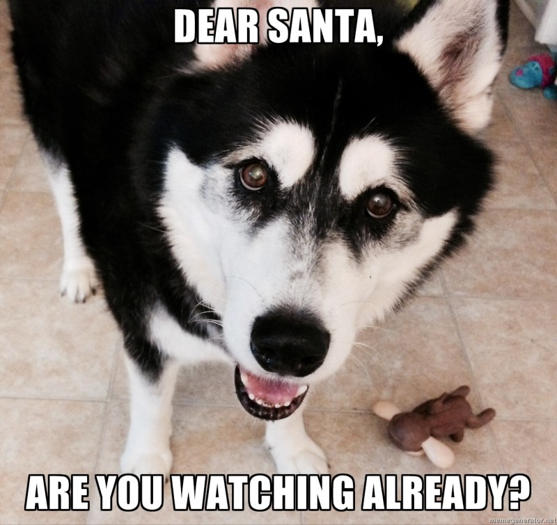 Large Of Cute Puppy Meme