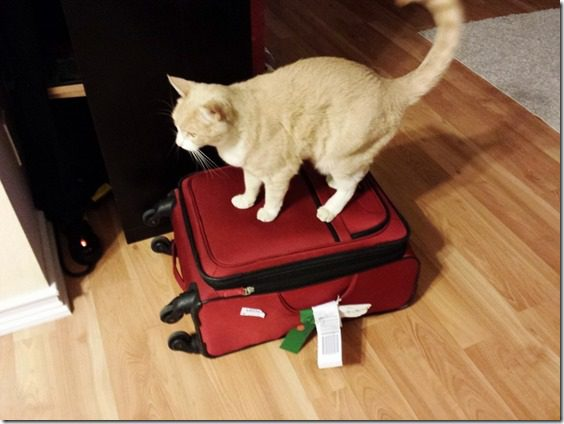 cat on my suitcase 800x600 thumb TMI Thursday