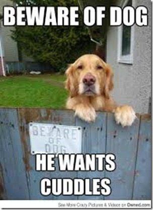 beware of dog thumb Runner Bit By Dog–What to do