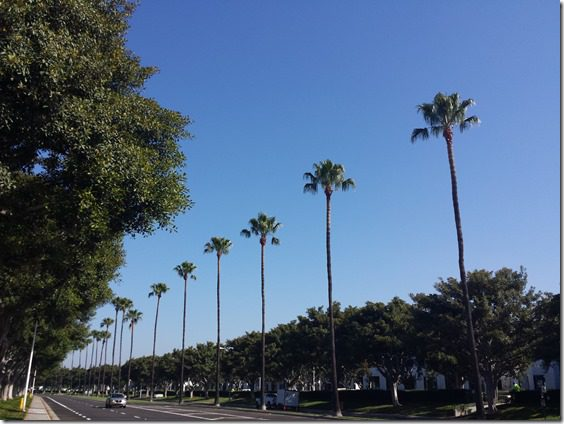 palm trees on run thumb Propel Challenge II Workout With A Friend