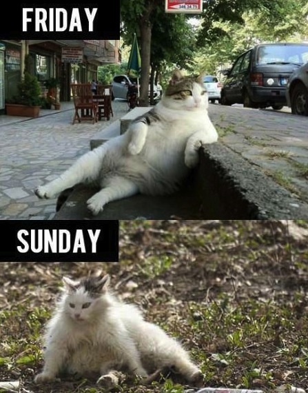 friday-cat-sunday-where-the-fuck-am-i