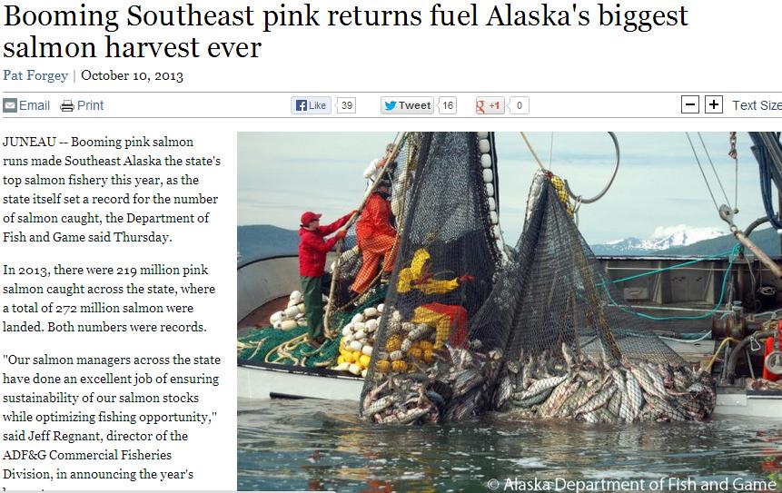Pink Salmon in Alaska