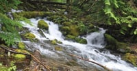 Water rushes in a stream at the Buck Creek Recreation Area.