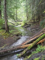A trail leads hikers along Buck Creek.