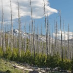 Wildfires Take a Toll on Forests, Man, and Beasts