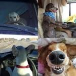 Keeping your RVing Dogs Healthy