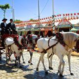 Sevilla horses