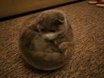 cat-in-fish-bowl