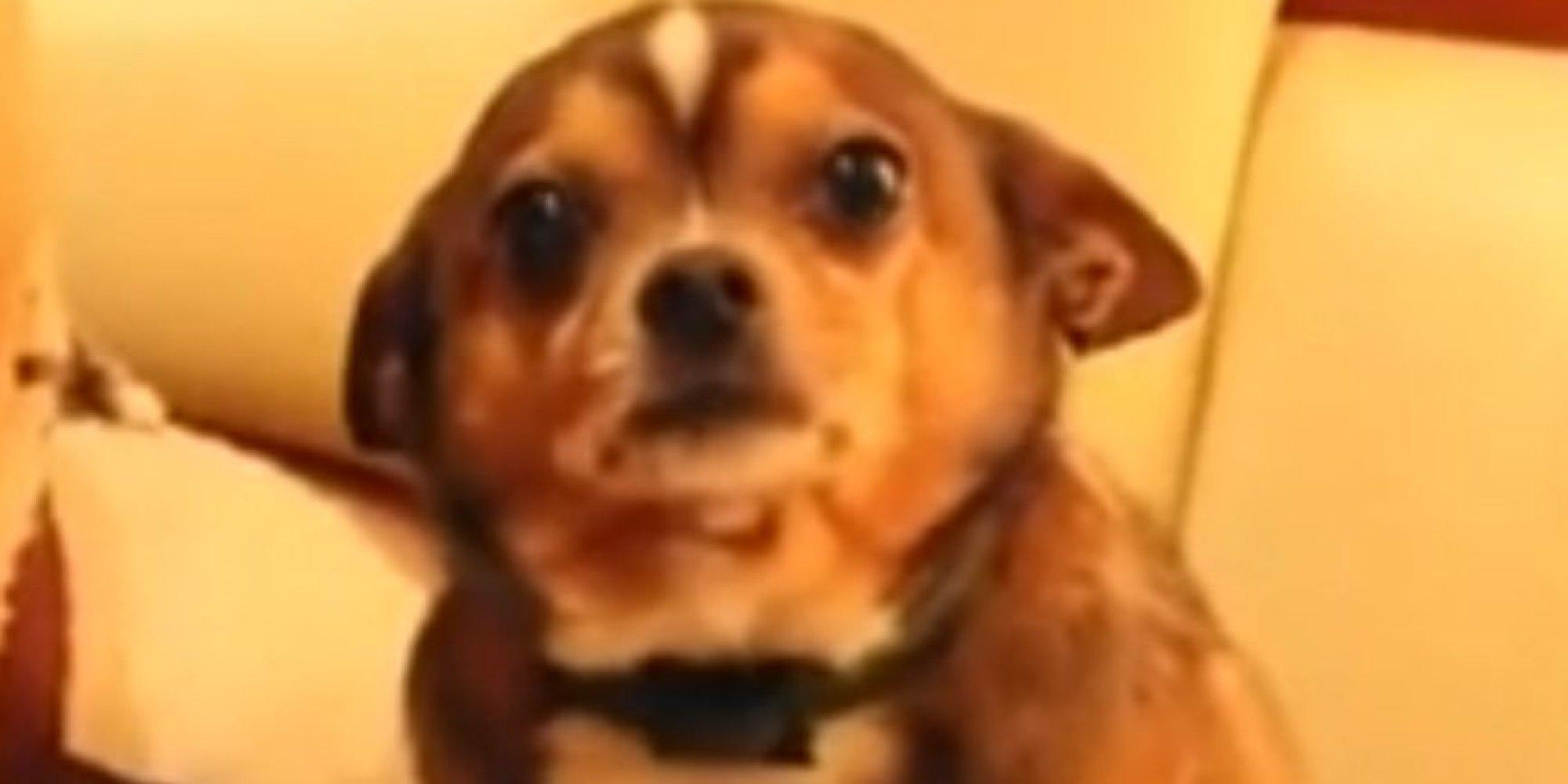 Fullsize Of Denver The Guilty Dog