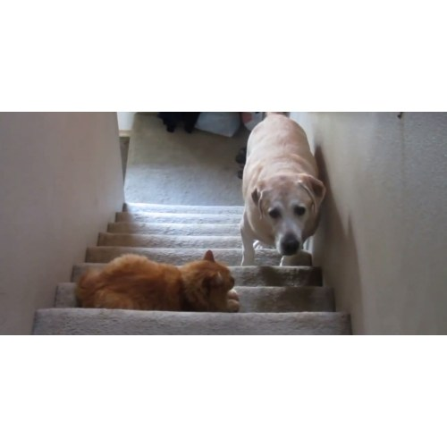Medium Crop Of Dog Wants A Kitty