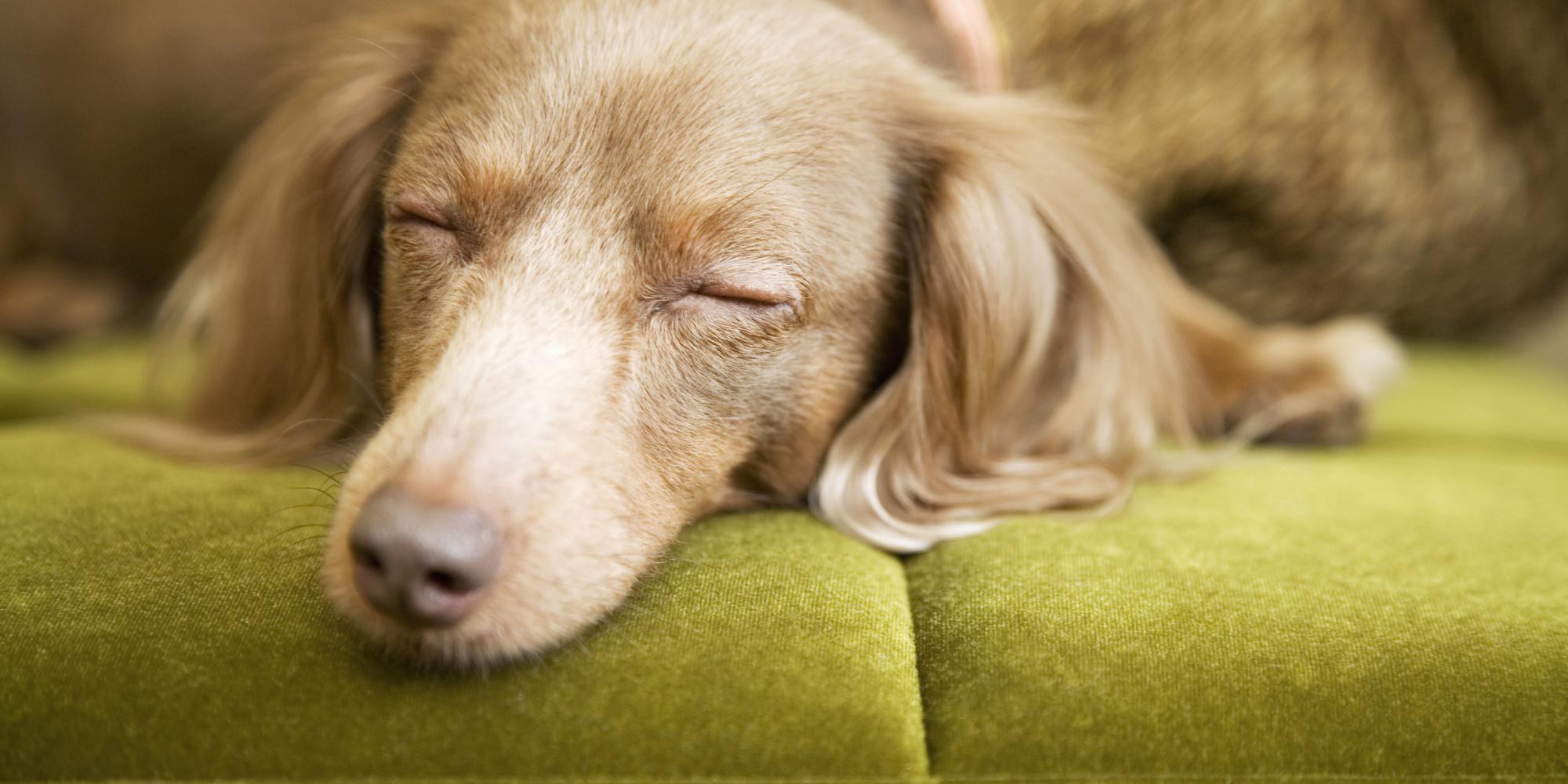 Fullsize Of Putting The Dog To Sleep Lyrics