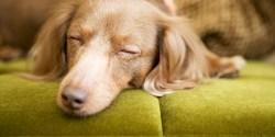 Small Of Putting The Dog To Sleep Lyrics