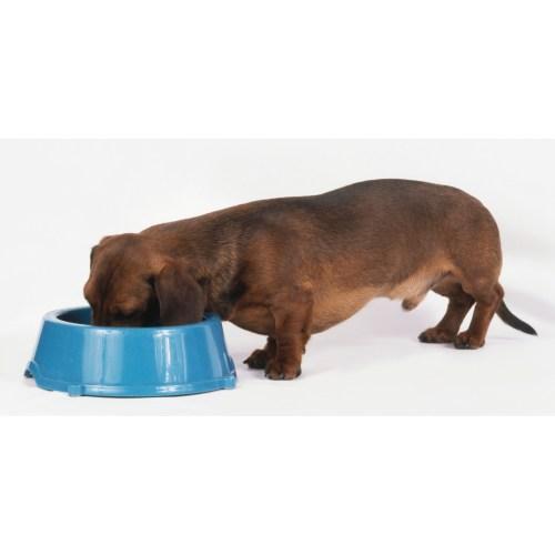 Medium Crop Of Can Dogs Have Avocado
