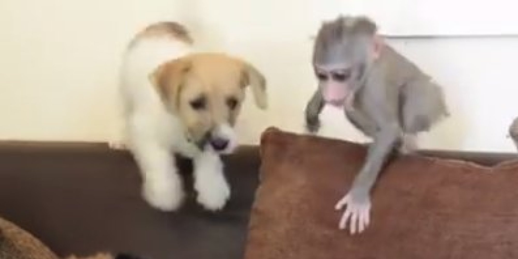 Invigorating Twopuppies Huffpost After Being Rejected By Her A Baby Monkey Makes Friends Monkey Baby Puppy Gif Monkey Puppy Baby Doll After Being Rejected By Her A Baby Monkey Makes Friends bark post Monkey Baby Puppy