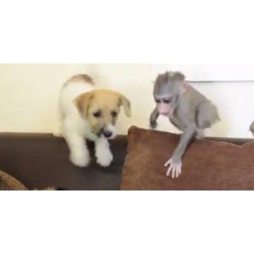 Medium Crop Of Monkey Baby Puppy