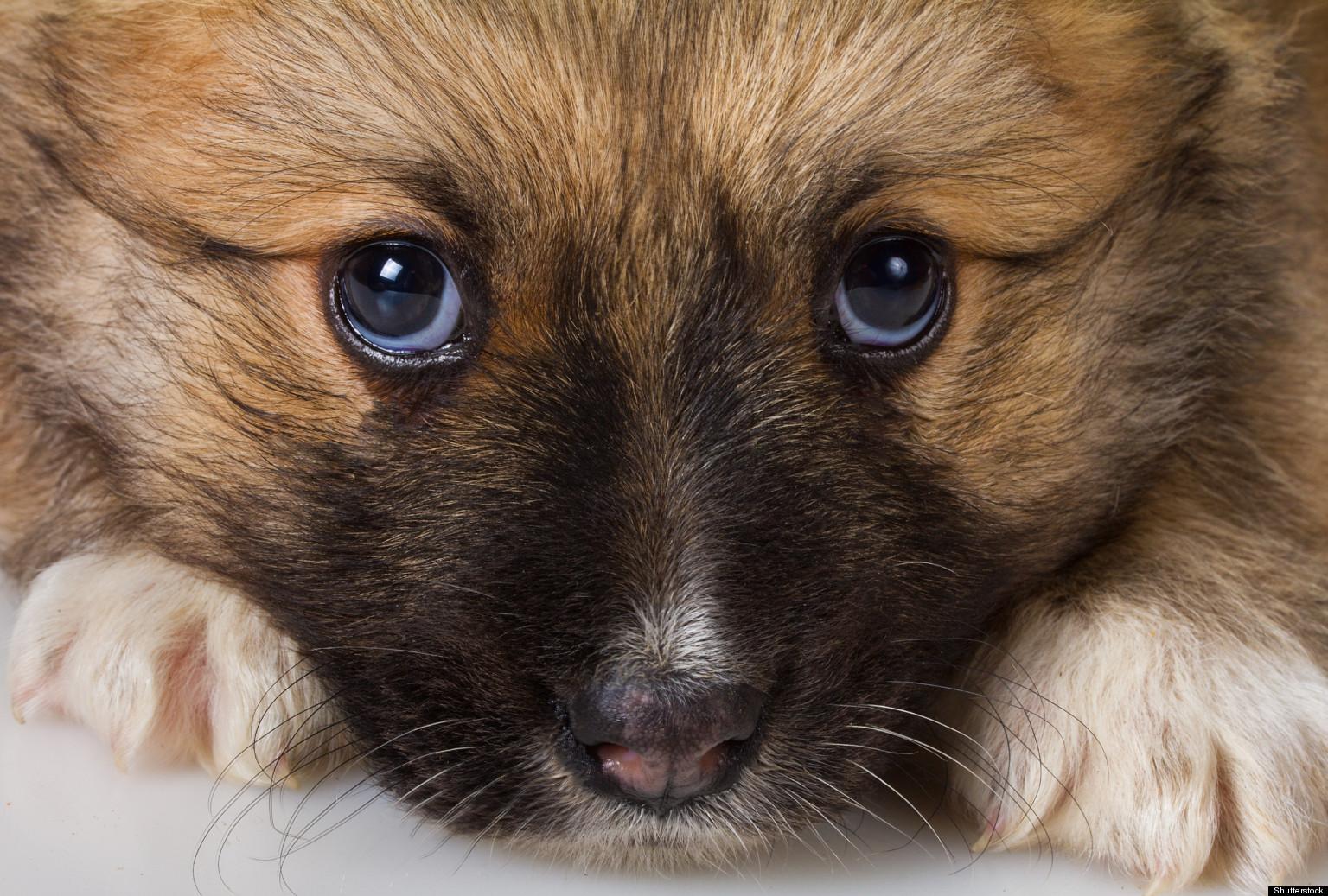 Fullsize Of Blood In Dogs Stool