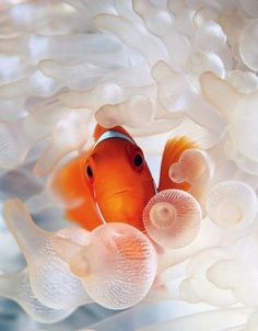 and Fish on Pinterest | Nano Aquarium, Reef Aquarium and Aquarium