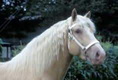 1000+ images about horses on Pinterest | Pegasus, Photo download and Unicorns