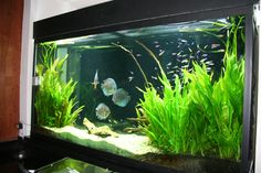 Aquascaping on Pinterest | Planted Aquarium, Aquarium and Aga