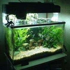 Freshwater Fish For Sale on Pinterest   Fish For Sale, Freshwater Fish