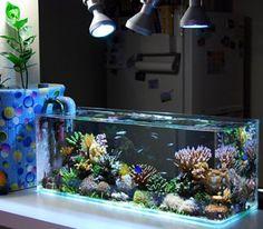 Aquarium on Pinterest | Saltwater Fish Tanks, Aquarium Design and