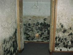 Black Mold Health, Pictures, Removal in Bathroom