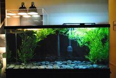 Turtle tanks on Pinterest | Indoor Pond, Turtle Pond and Turtles
