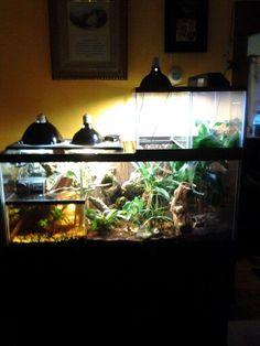 75 gal tree frog Vivarium, with 5.5 gal  breeder tank and 2, 10