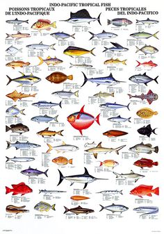 images about Fish Charts on Pinterest   Fish, Sharks and Fish chart