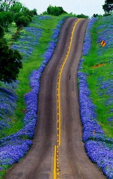 Texas Bluebonnets Highway, United States: