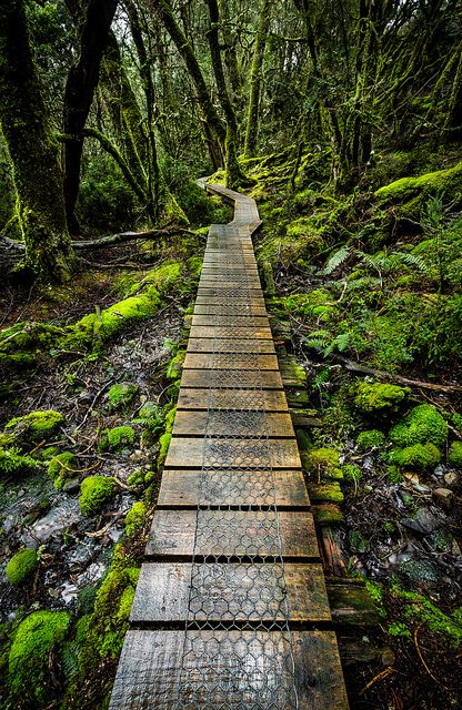 Enchanted Forest, Cradle Mountain, Tasmania https://play.google.com/store/music/artist?id=Aoxq3iz645k55co23w4khahhmxy&feature=search_result: