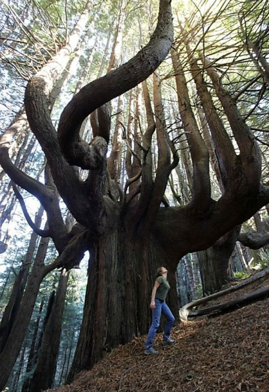 Enchanted Forest - Redwood National Park, California, USA: