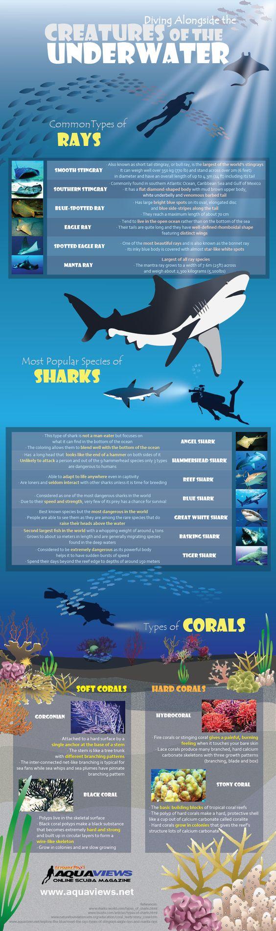 Creatures of the Underwater infographic