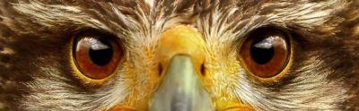 http://wallpaperscraft.com/image/51168/3840x1200.jpg | Eyes Animals | Pinterest