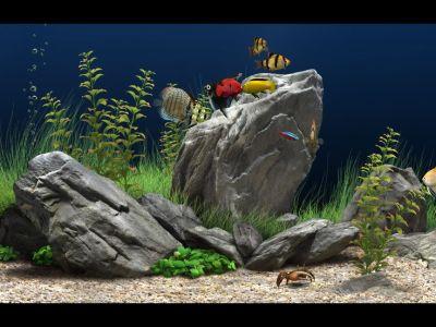 70 best images about Places to Visit on Pinterest | Moving desktop backgrounds, Live aquarium ...