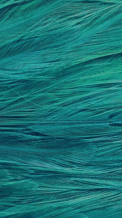 Feather Blue Bird Pattern #iPhone #5s #wallpaper | iPhone 5(s) Wallpapers | Pinterest | Iphone ...