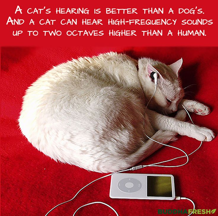 How can I hear the different frequencies of sound that dogs and cats hear 3