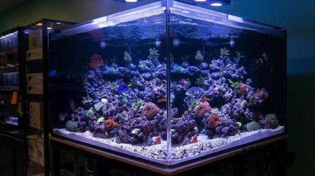 gallon salt water fish tank: Amazing Aquariums, Amazing Salt, Marine