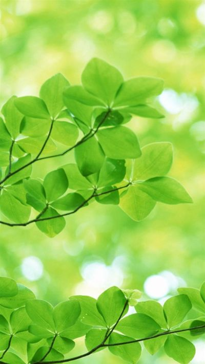 TAP AND GET THE FREE APP! Unicolor Nature Blurred Light Green Day Leaves Macro HD iPhone 6 ...