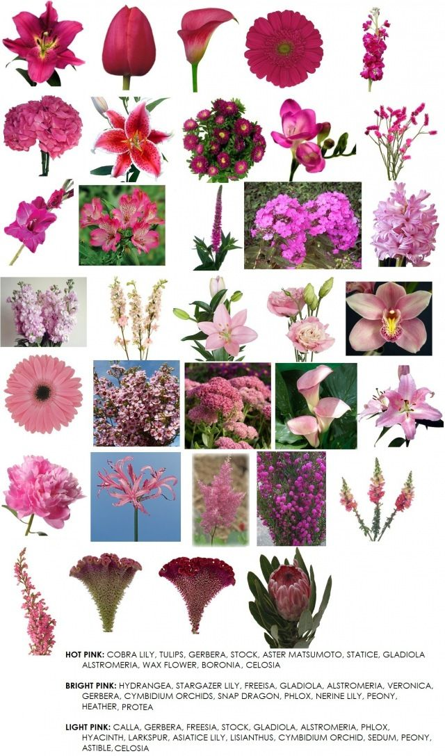 Pictures of pink flowers and name animaxwallpaper best 25 pink flower names ideas on mightylinksfo