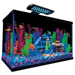 10, Tetra Glofish, Gal Aquariums, Fish Tanks, 65 Glofish, Glofish Kits
