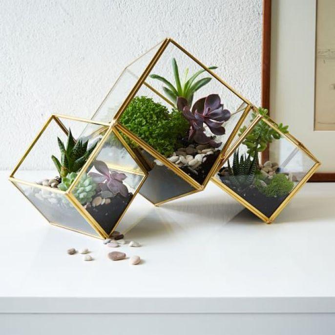 Cube Terrarium / West Elm