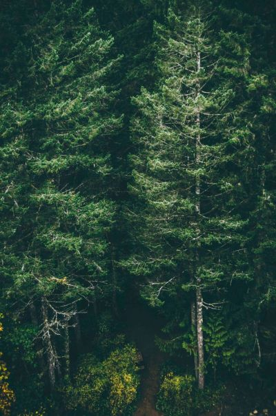 Green forest trees iphone 6 plus wallpaper background | iPhone Wallpapers | Pinterest | Trees ...