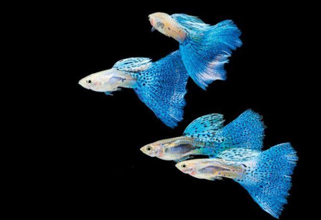 , Fish Care, Freshwater Fish, Tropical Fish, Aquariums Pets Fish