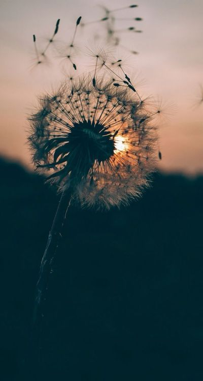 25+ best ideas about Hipster iphone wallpapers on Pinterest | Beauty iphone wallpaper, Android ...