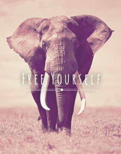 25+ Best Ideas about Elephant Wallpaper on Pinterest   Elephant background, Phone backgrounds ...