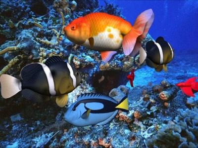 3D Screensaver Sound With Screen Saver | Cool nature screensavers for desktop - Beautiful ...