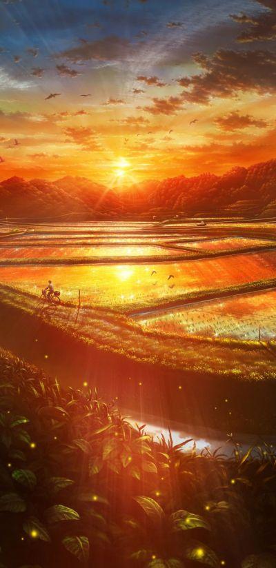 A Midsummer Nights Flowers HD Wide Wallpaper for Widescreen (30 Wallpapers) – HD Wallpapers
